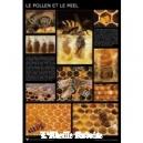 POSTER - PLANCHE D'INFORMATION COULEUR - ABEILLES